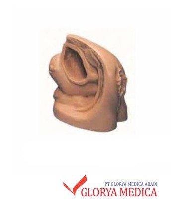 alat peraga kesehatan reproduksi wanita